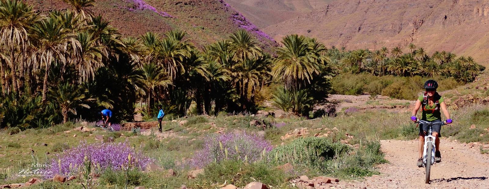 Us Travel Companies Morocco Trips